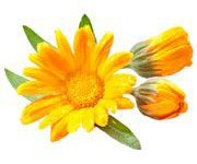 by-cosmetics Calendula